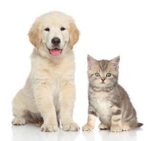 argento colloidale per cani e gatti